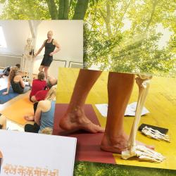 Modular Therapy Course (MTC) – Anatomie. Alignment. Yogatherapie.