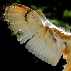 Arm und Hand - Von Flügeln und Wurzeln