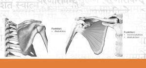 Schulter und Schultergürtel - Freiheit und Weite
