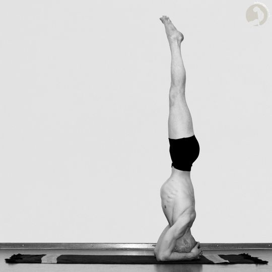 Baddha  Hasta  Shirshasana  [A]